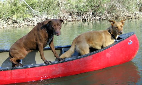 Many canoeists, like these, are ignorant of Missouri law, and couldn't care less.