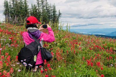 Alpine wildflowers at Sun Peaks Resort