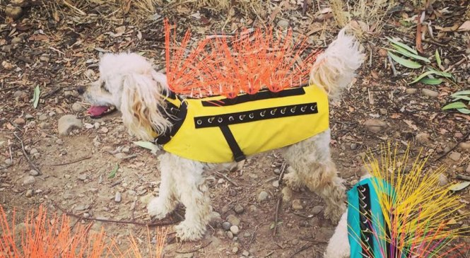 CoyoteVest Is the Punk Rock Product that Keeps Your Pet Stylish and Safe From Predators