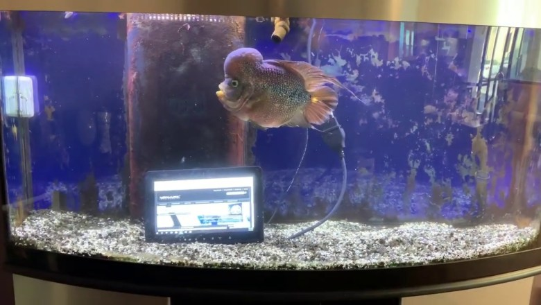 10.1″ Industrial & Automotive Display Monitor DEMO Submerged in Water Fish Aquarium