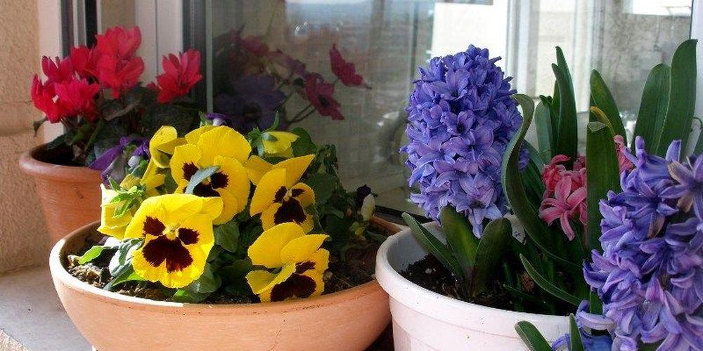Πως να διώξετε τα ενοχλητικά ζωύφια από τις γλάστρες σας με δύο φυσικούς τρόπους