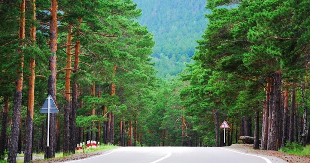Στη Νορβηγία δεν θα κοπεί ξανά ούτε ένα δέντρο