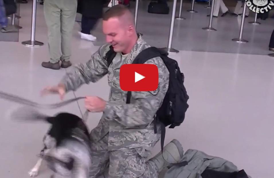 Οι απίστευτες χαρές που κάνουν οι σκύλοι οταν υποδέχονται τα αφεντικά τους!