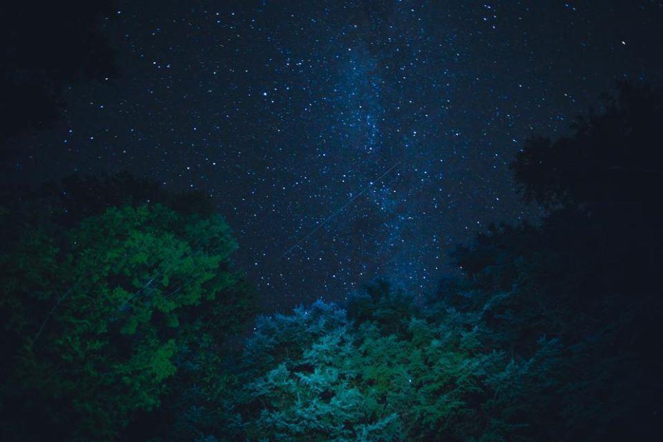 Fôret sous ciel nocturne étoilée