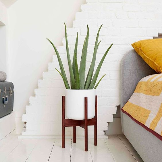 Les plus belles plantes d'intérieur pour une chambre plus cosy