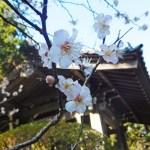 寿福寺~梅かまくら寺社特別参拝(2019年)~