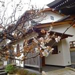 妙高院◆鎌倉・建長寺・境内散歩◆