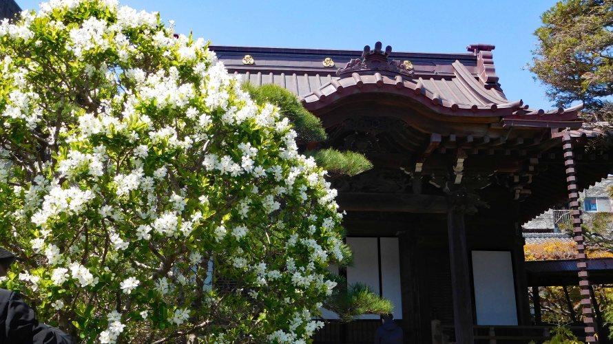 鎌倉・大巧寺(だいぎょうじ)◆境内散歩◆
