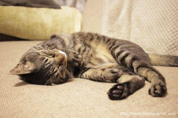 遊び疲れて、ソファで寝ているキジトラ猫のゆう