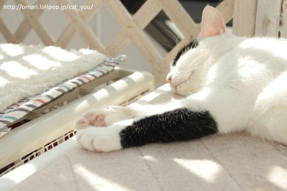 白黒猫の肉球❤️