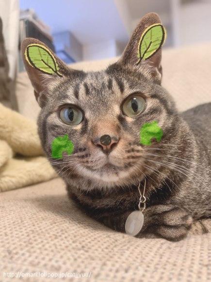 森の妖精になったキジトラ猫のゆう