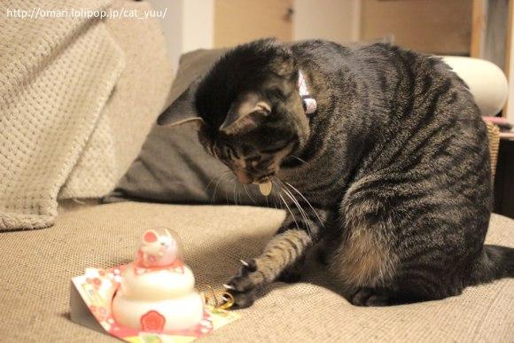 水引を片手でちょいちょいするキジトラ猫のゆう