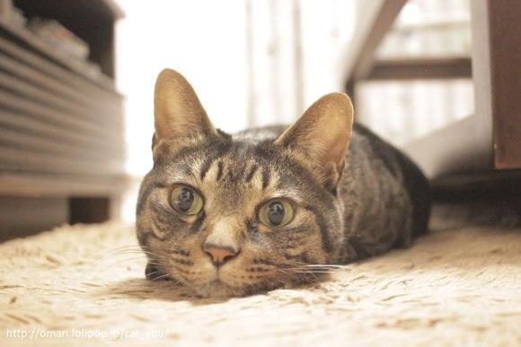 撮れ高OKかにゃ、とでも言いたげなキジトラ猫のゆう