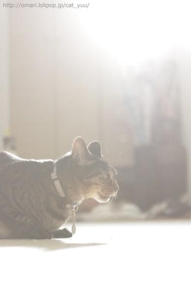 フレーメンしてるキジトラ猫のゆう
