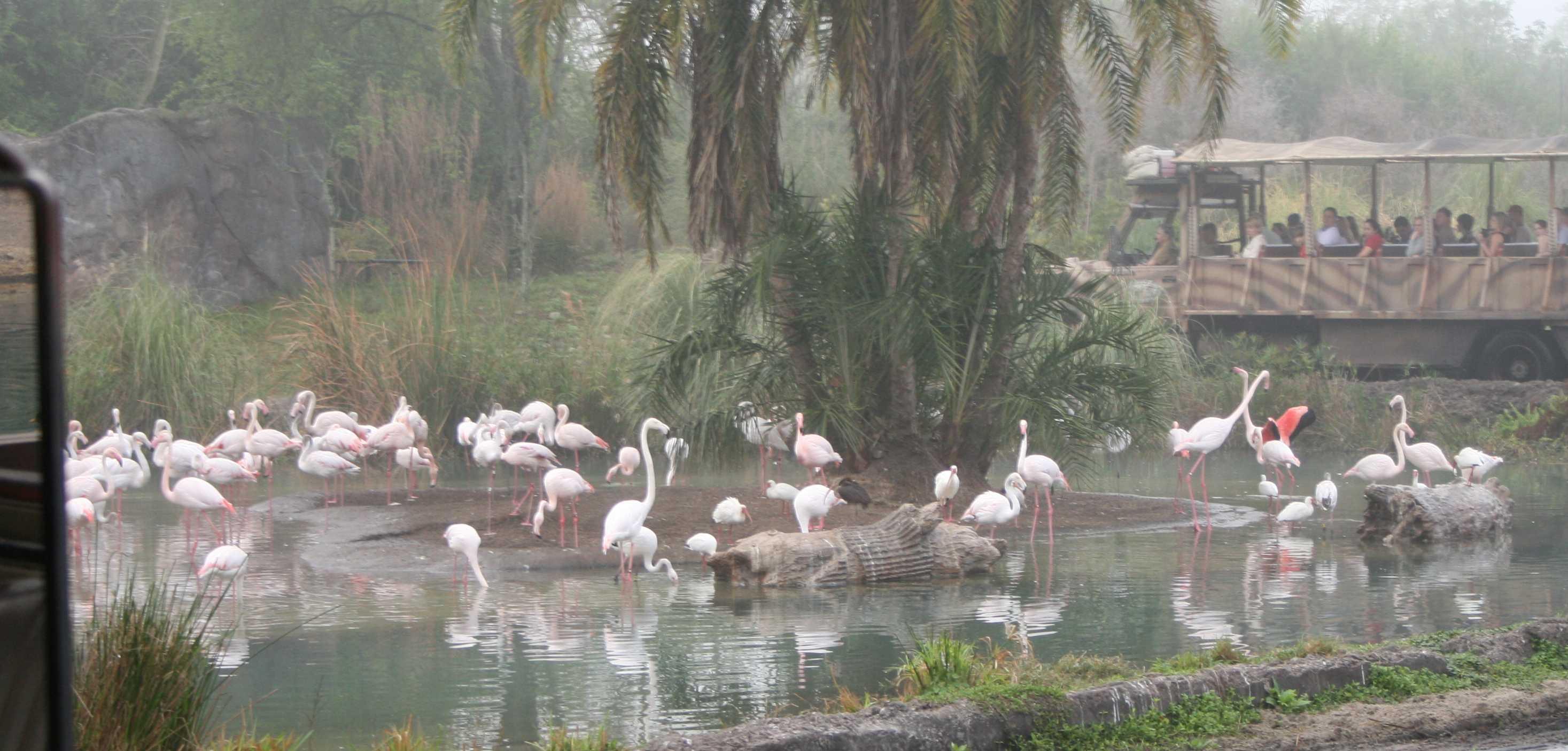 img_0135-flamingos-with-car1