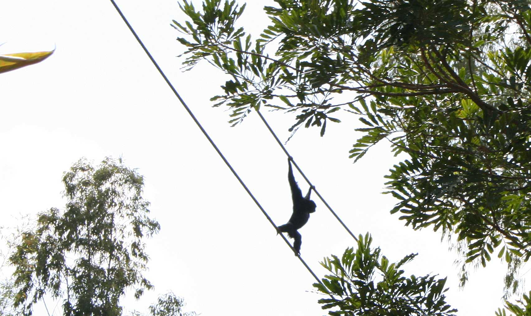 img_0183-monkey-on-wire-2