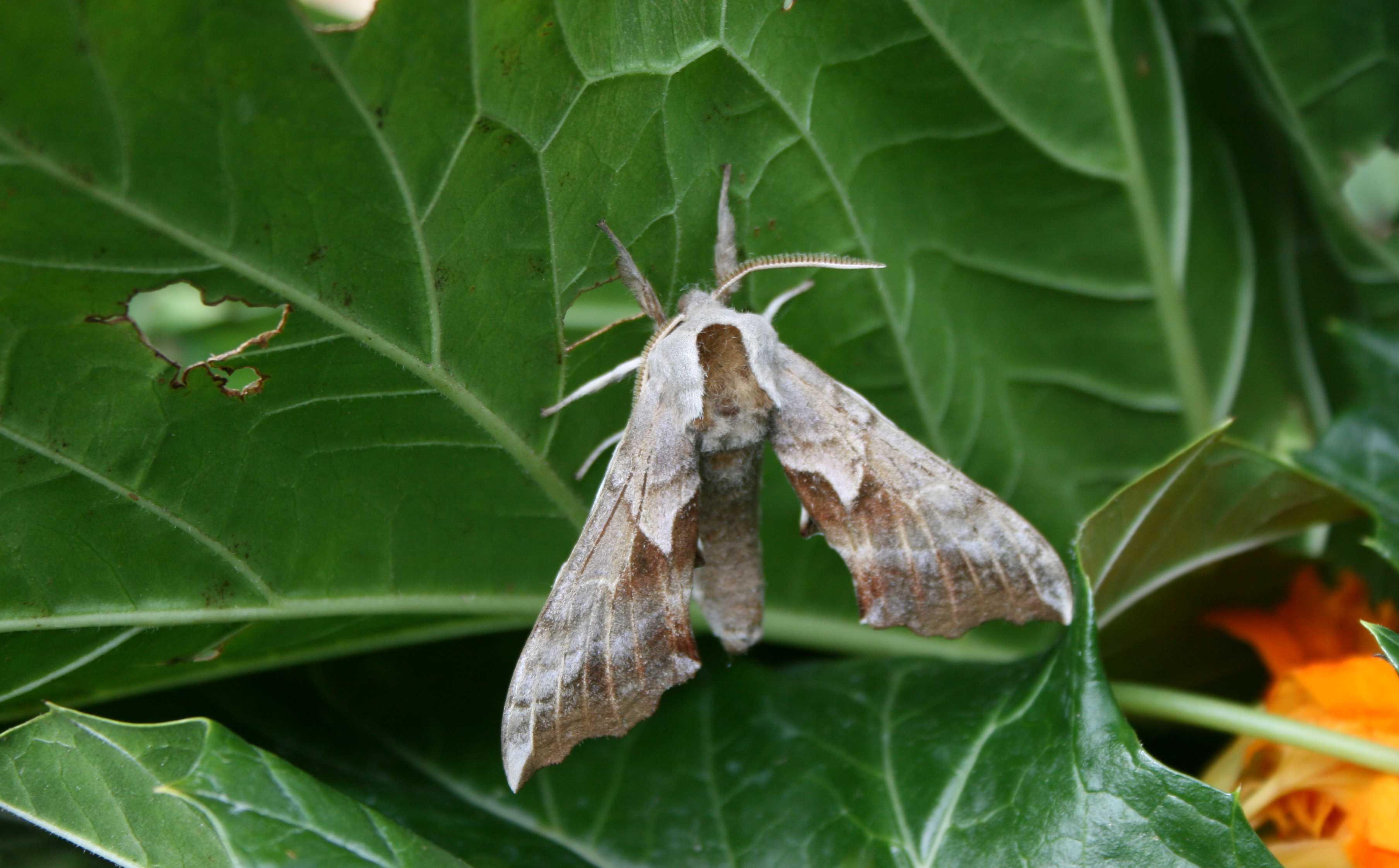20090614_moth