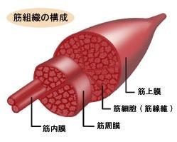 長崎市筋膜