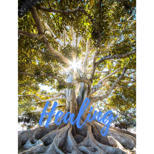 An Image of a Tall Tree with the Word Healing Written on it