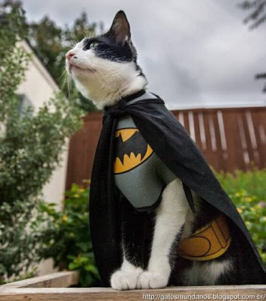 BatCat Cosplay