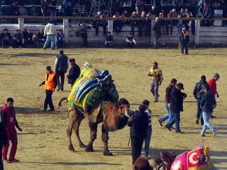 Camels2015Q