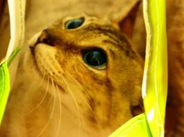 gato dentro de saco