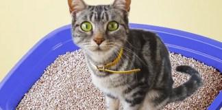 caixa de areia do gato