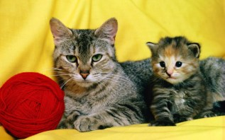 mother_and_kitten_17