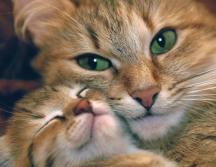 mother_and_kitten_3