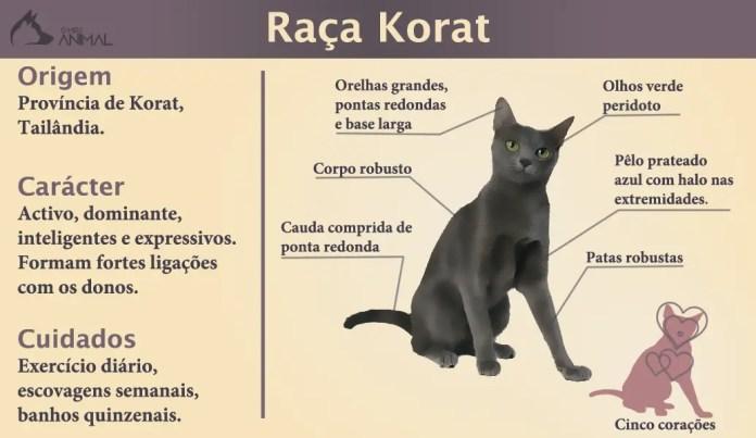 infografico-raça-gato-korat