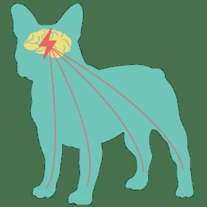 epilepsia no cão