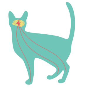 epilepsia felina