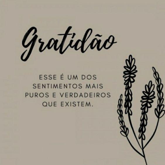 Frases de um sentimento puro que é a gratidão.