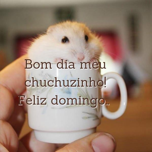 Bom dia, Feliz domingo chuchuzinho