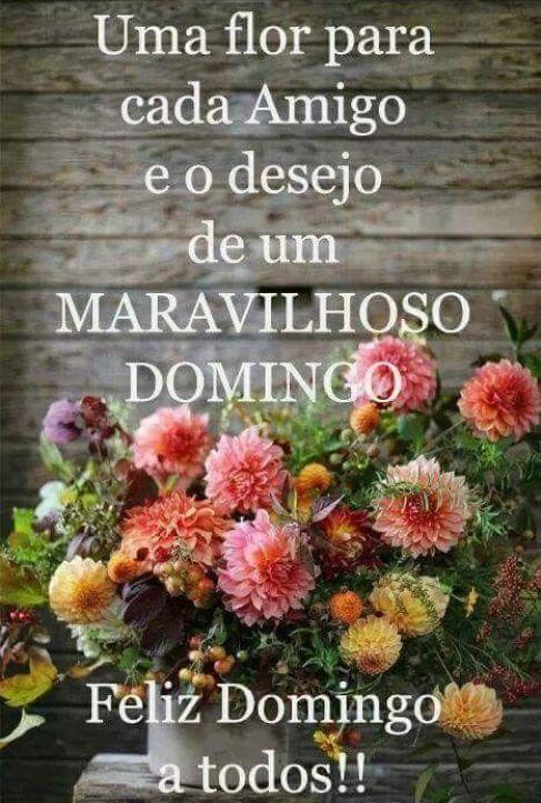 Uma flor para cada amigo e o desejo de um maravilhoso domingo. Feliz domingo a todos!!