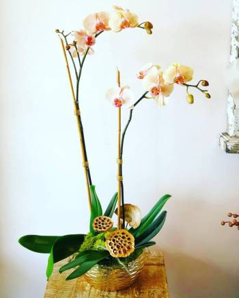 Double Spike Orchids