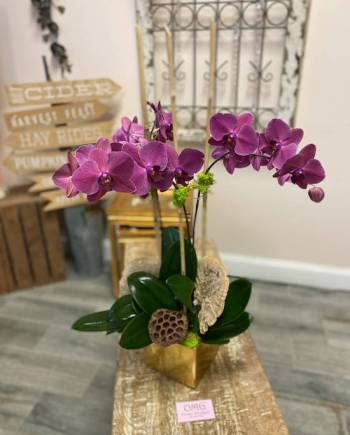 Tripple Orchid Spike