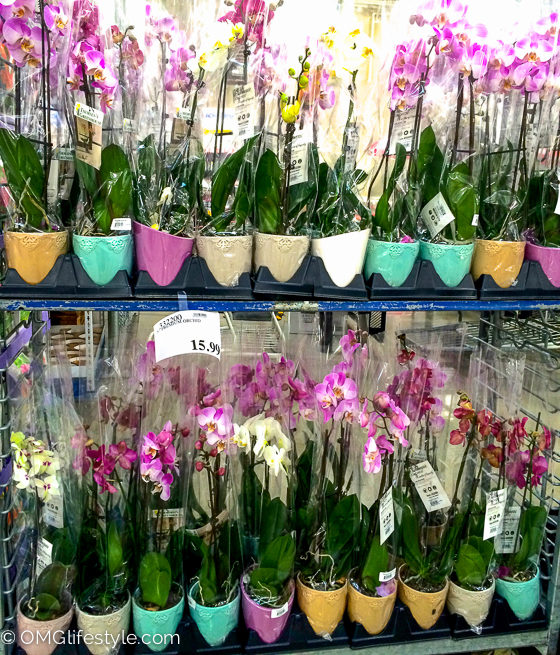 Costco Finds for Spring  OMG Lifestyle Blog