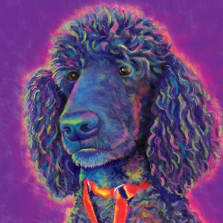 Poodle Pet Portrait