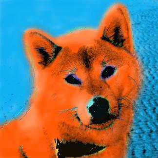 Shiba Inu Portrait