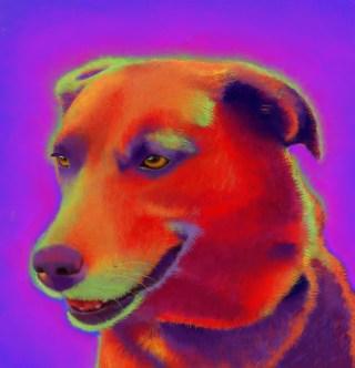 Brown Labrador Custom Pet Portrait