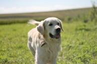 Лучшая моя фотография моей собаки