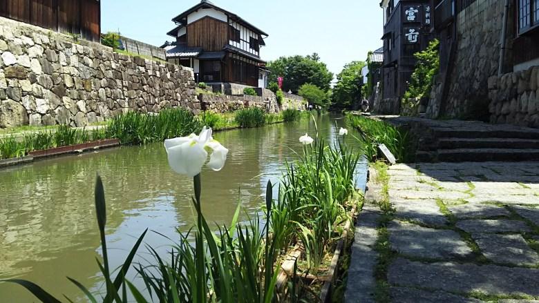 花菖蒲の八幡堀
