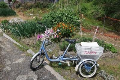 沖島_三輪自転車