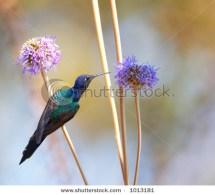 Hummingbird feeding on the flower 2