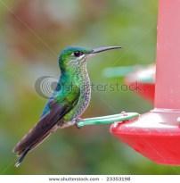 hummingbird taking a rest on feeder