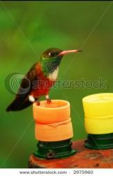 stock-photo-bird-colibri-2975960