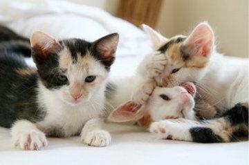 Anak kucing2
