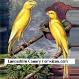 Lancashire Canaries