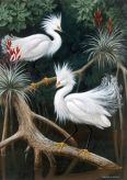 Snowy Egrets - Lukisan Walter Weber di National Geographic